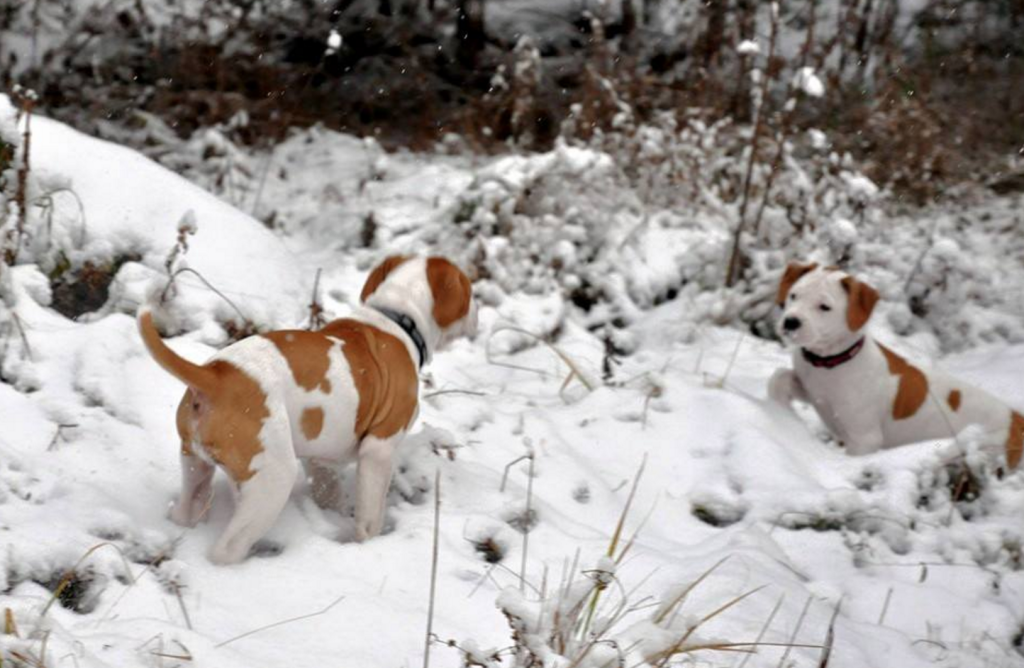 Puppies experiencing snow for the first time? I cannot. It's too cute.