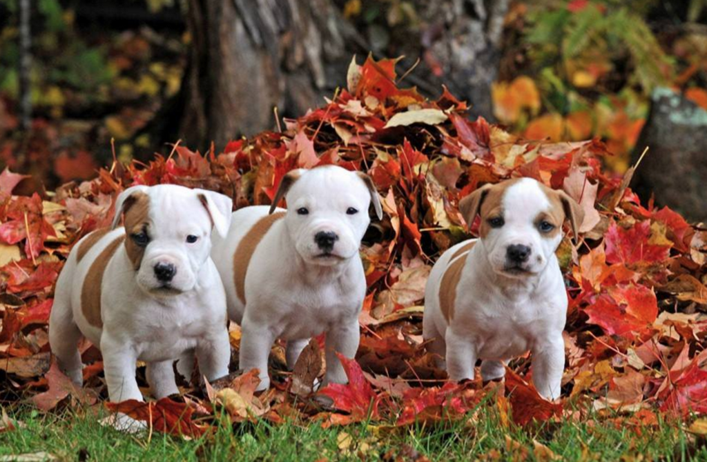 These are the actual puppies that show up in my Facebook news feed. HOW CUTE ARE THEY.