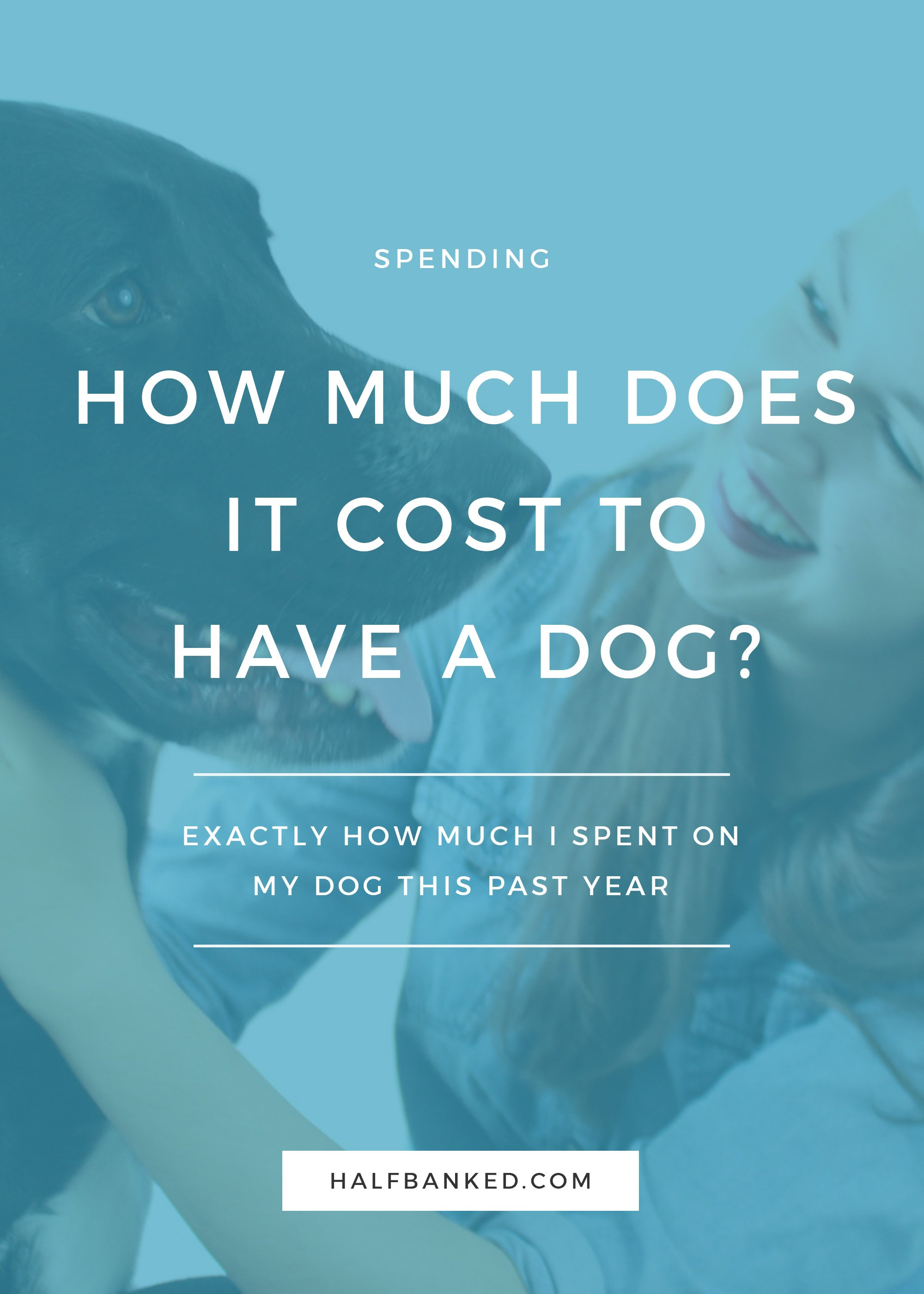 How much did it cost me to have a dog for the past year? I break down the numbers and find out how much I actually spent on my black lab this year, to help you budget for dog ownership.